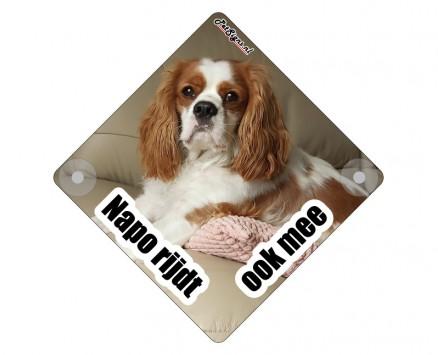 autobord hond rijdt ook mee