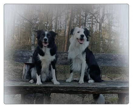 fotoplaat met eigen foto huisdier petsigns