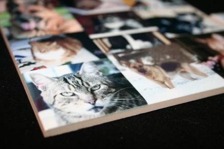 Tegel met eigen foto's van huisdieren