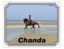 paardenstal bord PetSigns